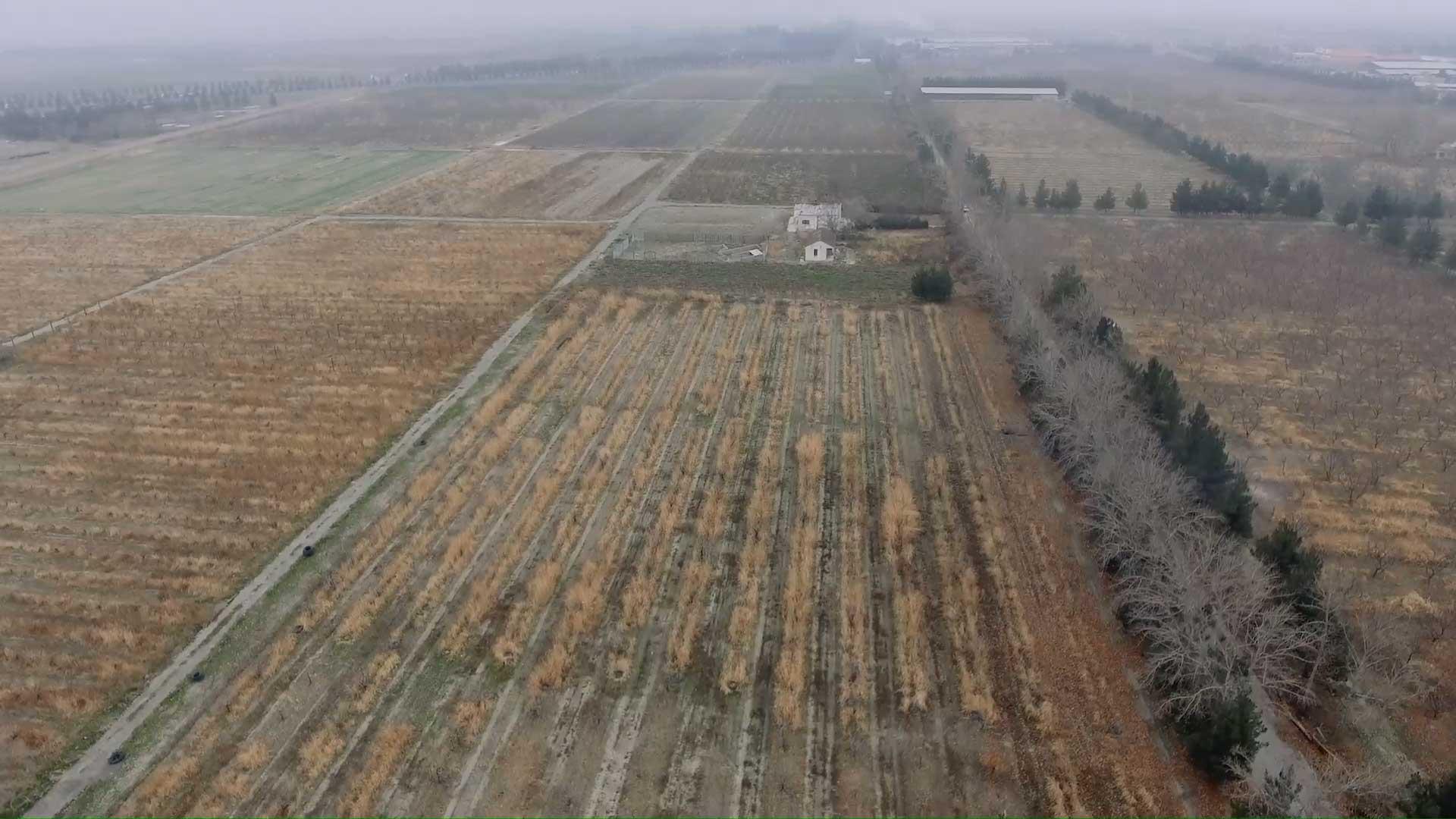 نگاهی به فعالیت و عملکرد شرکت صنعتی و کشاورزی شیرین خراسان در سال زراعی 97