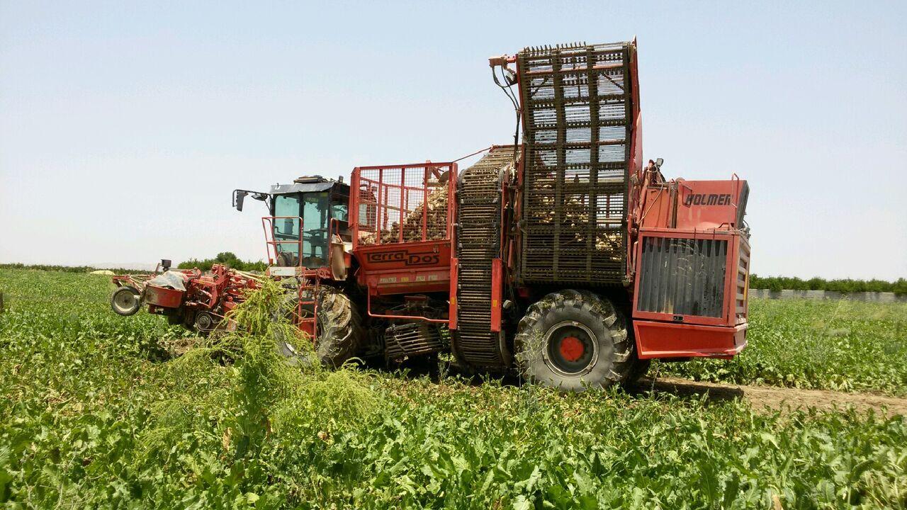 برداشت محصول چغندر قند در اراضی زیر کشت شرکت صنعتی و کشاورزی شیرین خراسان با ماشین آلات پیشرفته آغاز شد
