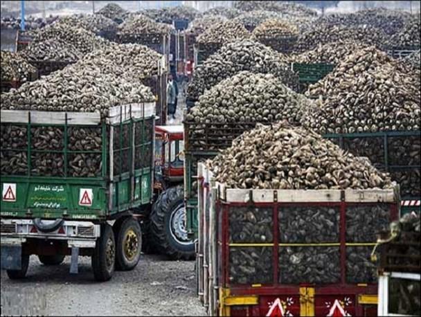 میزان چغندر تحویلی به کارخانه قند شرکت صنعتی و کشاورزی شیرین خراسان به بیش از20 هزار تن افزایش یافت